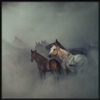 Lost Horses Poster