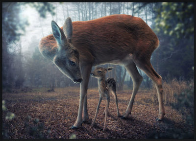 Mother and Fawn Poster