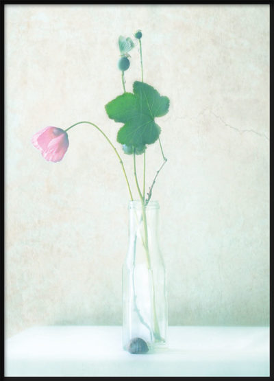 Softly Pink Poster